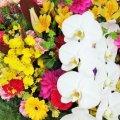 手のかかる子は、蘭や菊の花 ありのままで大丈夫
