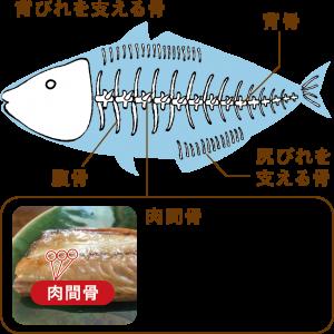 魚の骨の紹介