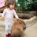 雨でも大丈夫!【大阪・兵庫】生きものとふれあえる屋内動物園