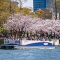 船上から ロープウェイから 関西の「乗り物×お花見」スポット