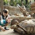 【関西ママおすすめ】かわいい動物に癒される 動物園がある施設5選