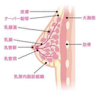 乳腺 炎 と は